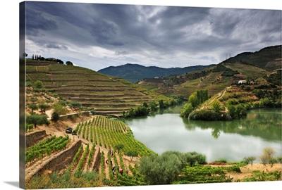 Grapes harvest along the river Tedo, Alto Douro, Portugal