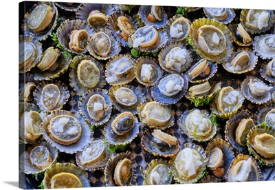 Grilled Limpets With Garlic, A Delicacy, Moledo Do Minho, Portugal