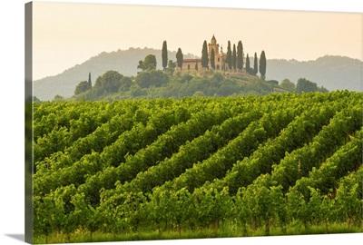 Gussago, Franciacorta, Lombardy, Italy. Vineyards