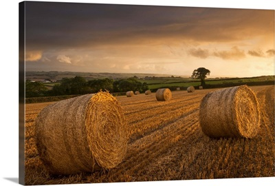 Hay Bales in a ploughed field at sunset, Eastington, Devon, England