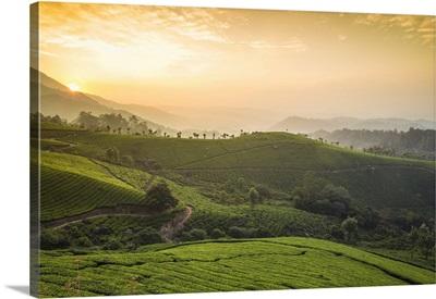 India, Kerala, Munnar, View Over Tea Estates At Sunrise