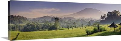 Indonesia, Bali, Sidemen, Iseh, Rice Fields and Gunung Agung Volcano
