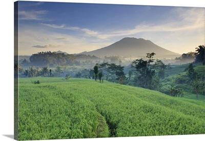 Indonesia, Bali, Sidemen Valley, Iseh, Rice Fields and Gunung Agung Volcano