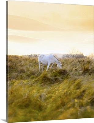 Ireland, County Donegal, Fanad, Horse in field