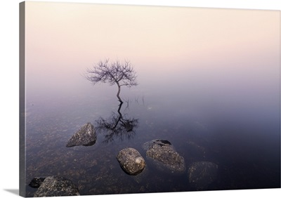 Ireland, County Donegal, tree reflected in Lough Dunlewey