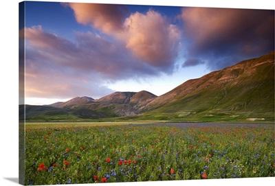 Italy, Marche, Sibillini National Park, plain of Castelluccio di Norcia