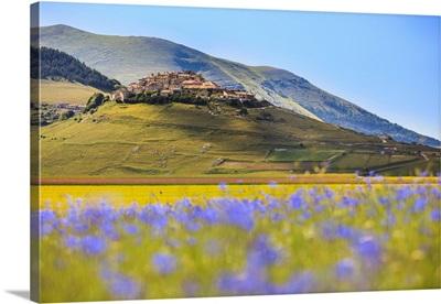 Italy, Umbria, Village of Castelluccio seen above fields of cornflowers