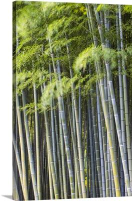 Japan, Kyoto, Arashiyama, Adashino Nenbutsu-Ji Temple