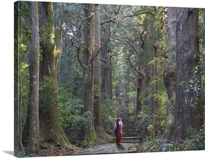 Japan, Wakayama Prefecture, Kumano Kodo Pilgrimage Trail, Japanese Cedars Forest
