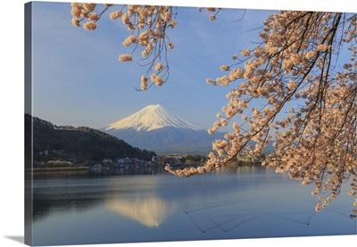 Japan, Yamanashi Prefecture, Kawaguchi-ko Lake, Mt Fuji and Cherry Blossoms