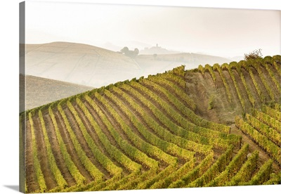 Langhe, Piedmont, Italy. Autumn Landscape With Vineyards And Hills.
