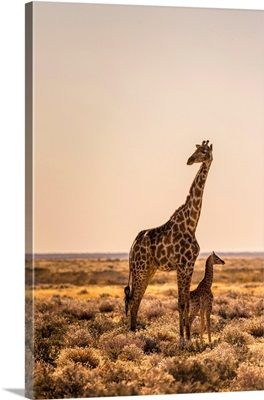 Lonely Giraffe with baby in Etosha, Namibia, Africa