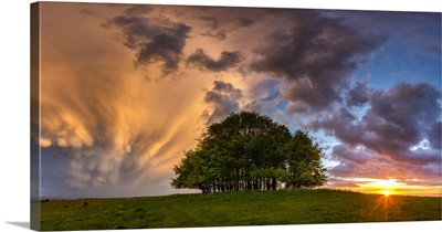 Mammatus Storm Clouds Over Beech Trees At Sunset, Win Green Hill, Wiltshire, England