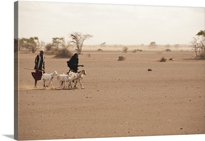 Merti, Northern Kenya, A family makes the long journey to market with their goats