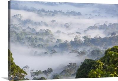 Mist, over tropical rainforest, early morning, Sabah, Borneo, Malaysia
