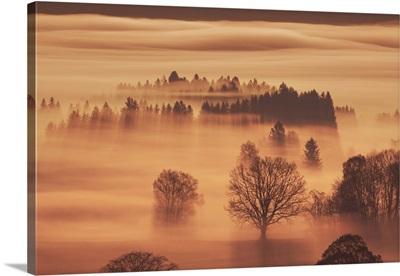 Misty Mood In Moor, Germany, Bavaria, Bad Tolz-Wolfratshausen, Kochel, Grossweil, Alps