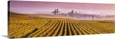Misty sunrise over Oger, Champagne Ardenne, France