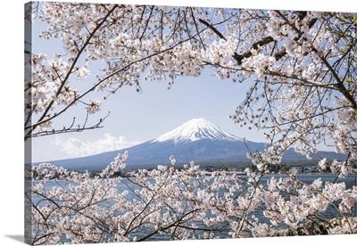 Mt, Fuji Near Lake Kawaguchiko During Cherry Blossom Season, Yamanashi Prefecture, Japan