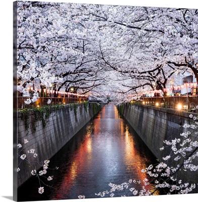 Nakameguro Sakura Festival, Tokyo, Japan