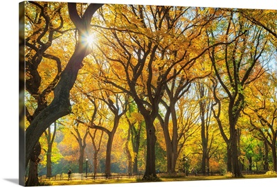 New York City, Manhattan, Central Park, The Mall