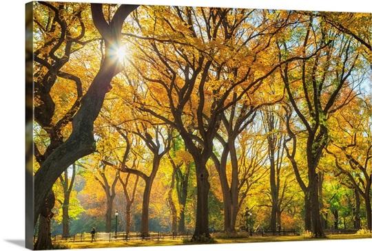 New York City, Manhattan, Central Park, The Mall Wall Art, Canvas ...