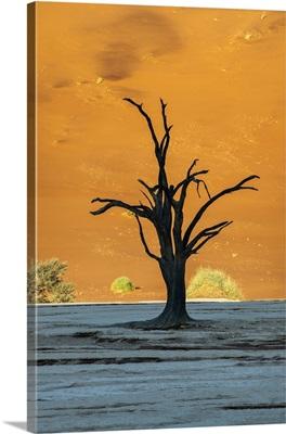 Old Dead Tree, Deadvlei, Namib-Naukluft National Park, Sesriem, Namibia