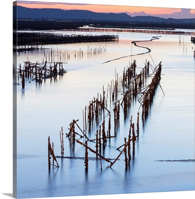 Oyster beds at sunset, Halong Bay, North-East Vietnam, South-East Asia