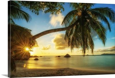 Palm Tree At Sunset, Anse Lazio Beach, Praslin, Seychelles
