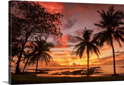 Palm Trees At Sunset, Khao Lak, Phang-Nga, Thailand, Asia