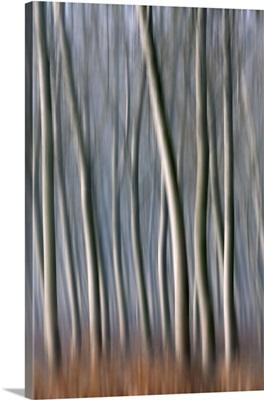 Plain Piedmont, Piedmont, Italy, Autumn abstract trees