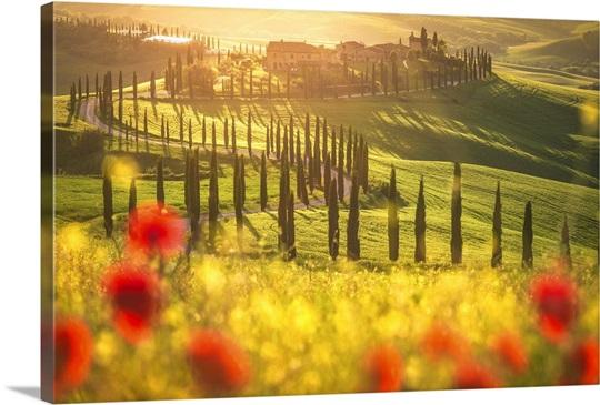 Podere Baccoleno, Asciano, Crete senesi, Tuscany, Italy Wall Art ...