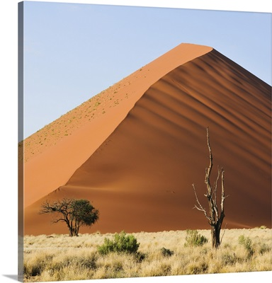 Red sand dunes in the Namib-Naukluft National Park, Namibia, Africa