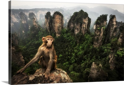 Rhesus Macaque Over The Cliffs Of Yellow Stone Village, Hunan, China