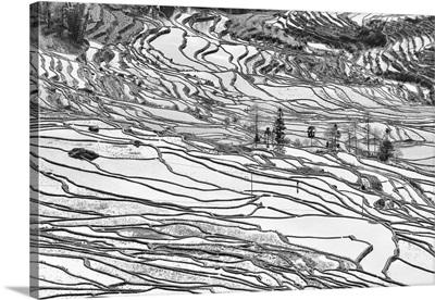Rice terraces in Yuanyang, Yunnan, China