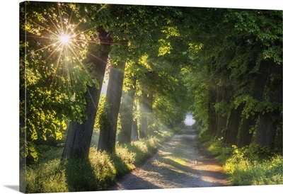 Road Lined With Old Lime Trees At Schaalsee, Mecklenburg-Western Pomerania, Germany