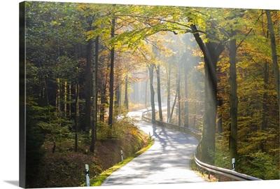 Road through autumn woodland, Saxon Switzerland, Saxony, Germany