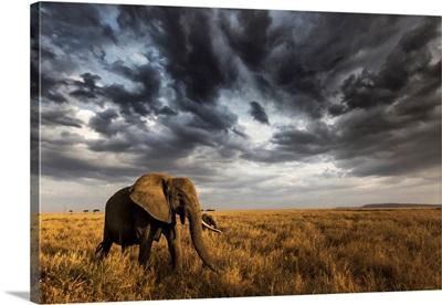 Seronera, Serengeti National Park, Tanzania, East Africa
