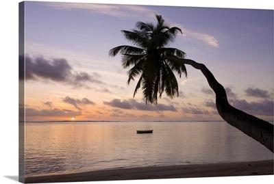 Seychelles, Mahe Island, horizontal palm, Fairyland Beach, dawn