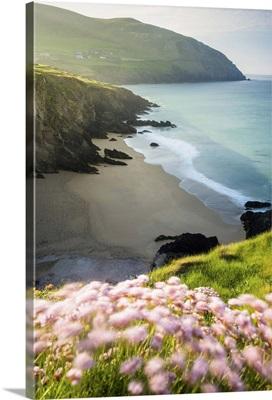 Slea Head, Dingle peninsula, County Kerry, Munster province, Ireland