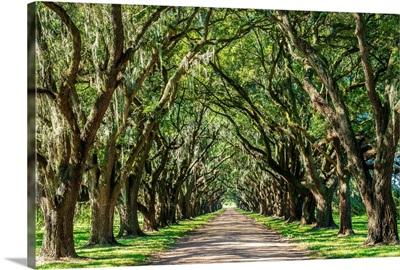 St. John the Baptist Parish. Evergreen Plantation road lined with southern oak trees