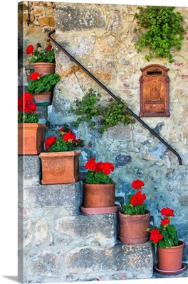 Staircase Of Geraniums, Tuscany, Italy