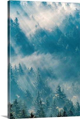 Sunlight through evergreen trees in the Great Smoky Mountains near Bear Ridge Gap