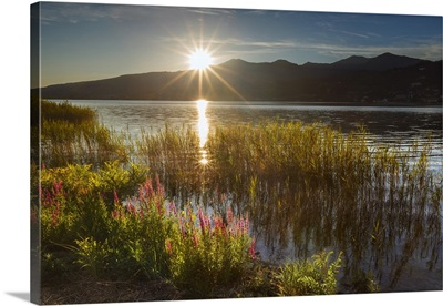 Sunset on Lake Pusiano from Bosisio Parini, Lythrum Salicaria in the foreground.