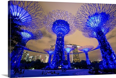 Supertrees at Gardens by the Bay, illuminated at night, Singapore, Southeast Asia