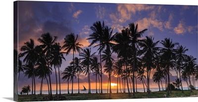 Tanzania. Zanzibar, Jambiani, Jambani Beach and Coconut Plantation