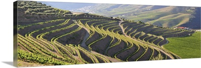 Terraced vineyards in the Douro region, Portugal