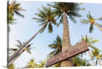 Thailand, Ko Samui, Chaweng beach, Sign on palm tree