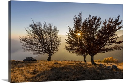 Three beech trees at sunset with Lake Como, Como, Lombardy, Italy