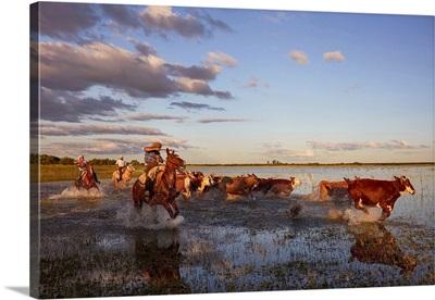 Three Gauchos Drive A Group Of Cows, Estancia Buena Vista, Corrientes, Argentina