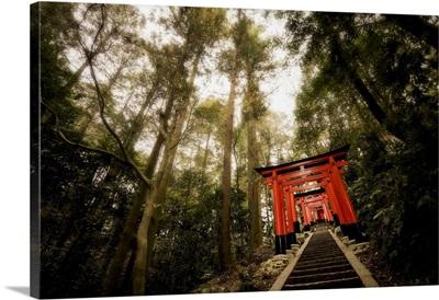 Torii Of Fushimi Inari-Taisha Temple, Kyoto, Japan
